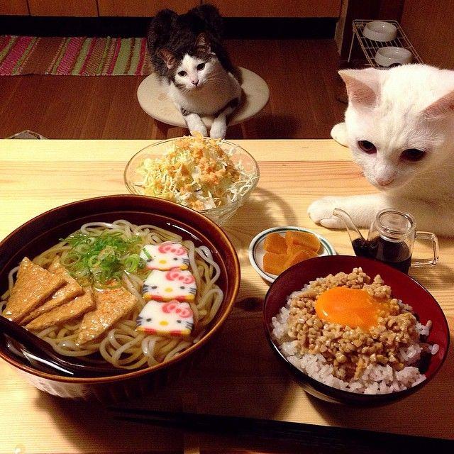 きつねうどん (via naomiuno @naomiuno | Websta (Webstagram))