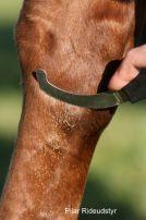 Bremselarvekniven er et must til din hest her i sommervarmen... når æggene udklægges i hestens mund eller tarme sætter larverne sig fast og kan skabe betændelse eller forstoppelse.