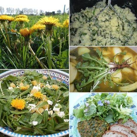 Paardenbloemen zijn een superfood! Gratis en voor niets te scoren, één brok gezondheid. Bloemen op je sla, bladeren door je sla of andere gerechten, bijvoorbeeld met andere rauwe groenten in een stamppot, af en toe een worteltje in een soep welke je met een staafmixer vermaalt, paardenbloem in gebakken ei... Maar er zijn veel meer mogelijkheden zoals kruidenboter, thee en... verzin het.