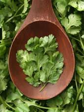 Cleansing Cilanto Pesto Recipe | Herbal Remedies