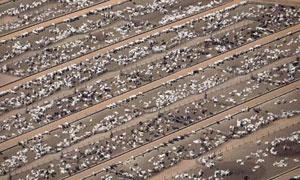 Eine Rinderfarm in Mato Grosso, Brasilien. Die UN sagt, dass die Landwirtschaft mit dem Verbrauch fossiler Brennstoffe gleichauf liegt, weil beide bei steigendem Wirtschaftswachstum rapide anwachsen. Foto: HO/Reuters