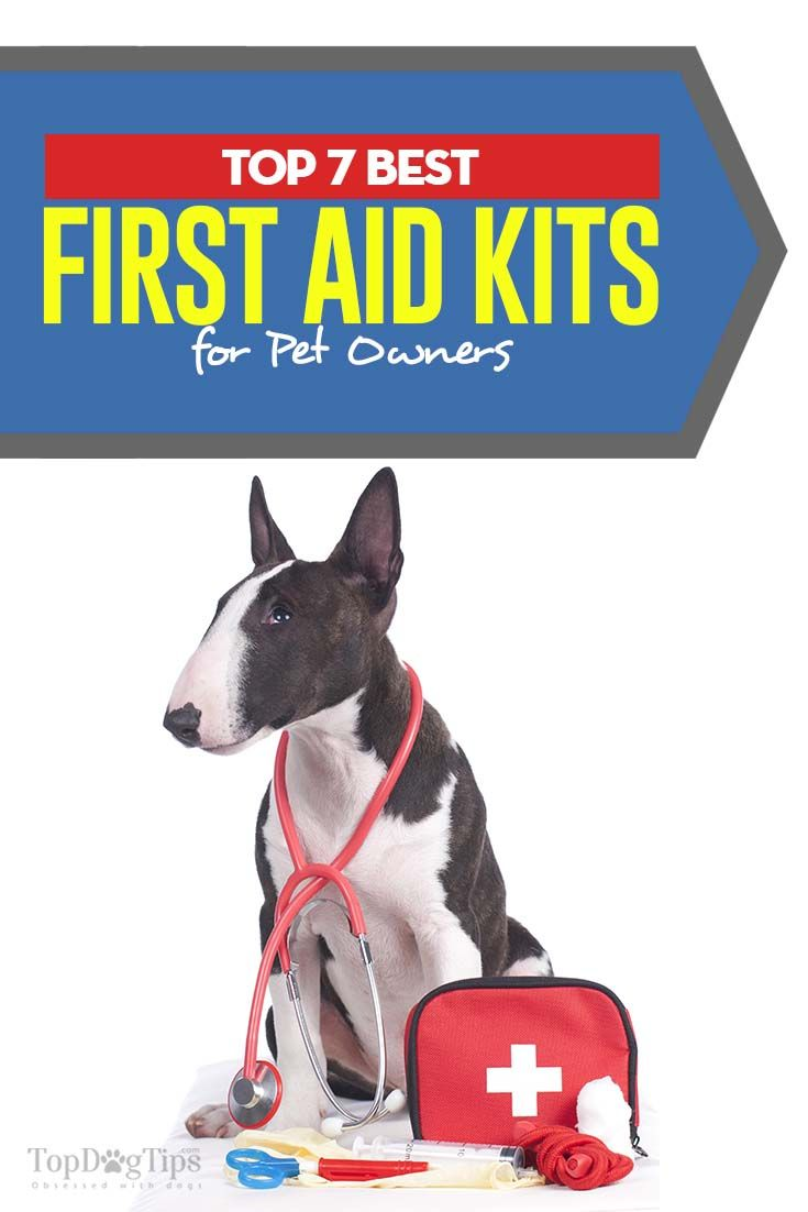 Top 7 Best Pre Assembled Dog First Aid Kits First Aid For Dogs