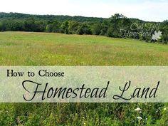 How to Choose Homestead Land - Oak Hill Homestead