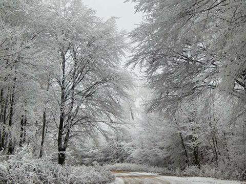 Almádi Ildikó A téli erdő varázsa. A kép a Vértesben készült. Több kép Ildikótól: www.facebook.com/ildiko.almadi