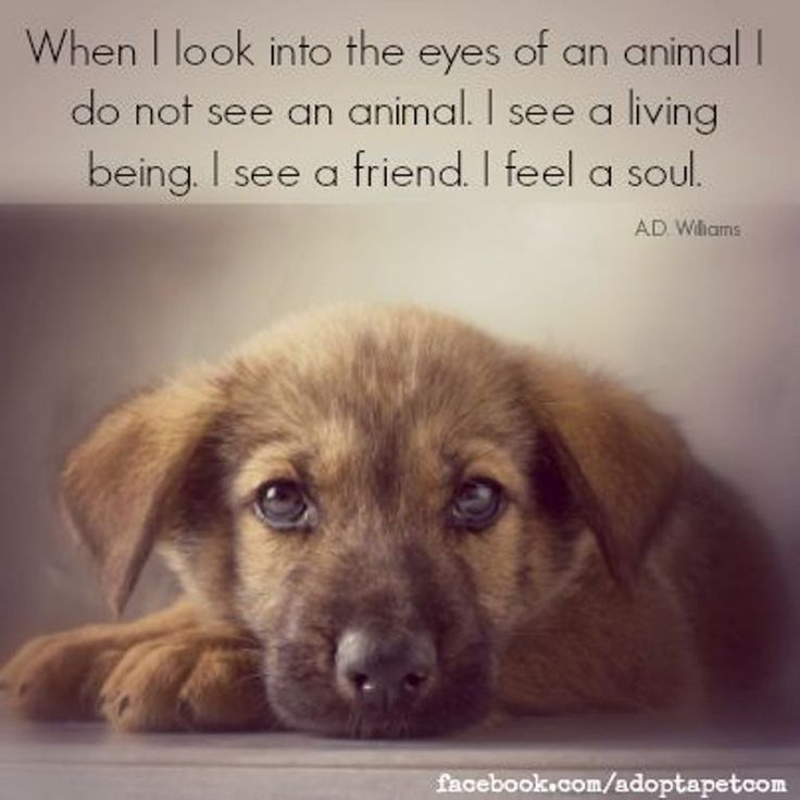 Inspirational Quotes About Pets. QuotesGram