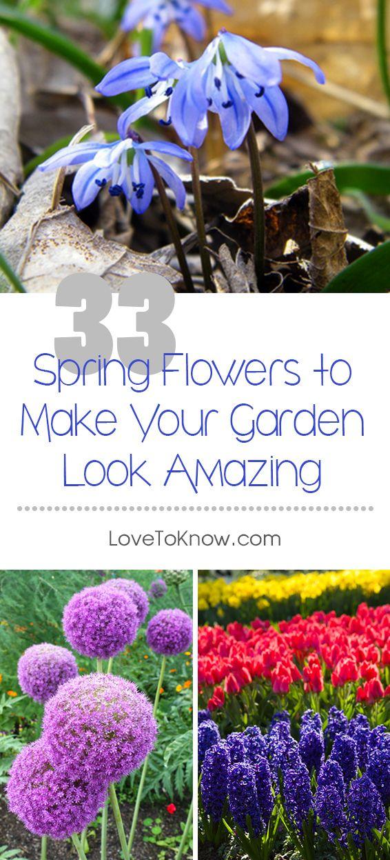 164 best gardening images on pinterest flower beds flowers garden and organic gardening