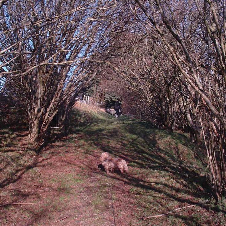 ABERDEENSHIRE HUMBLE ECO FRIENDLY FARM ANIMAL CARE