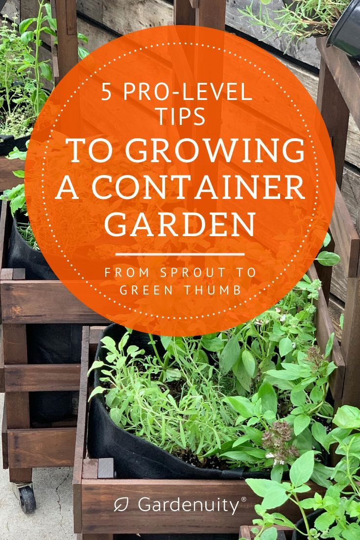 5 Pro Level Tips To Growing A Container Garden Container