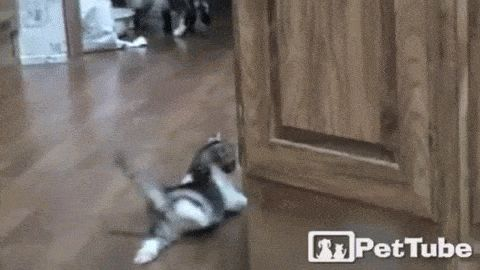 Break the system #lol #gif #cats