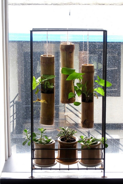 Office garden - the bamboo planters and ceramic bamboo-coloured ones