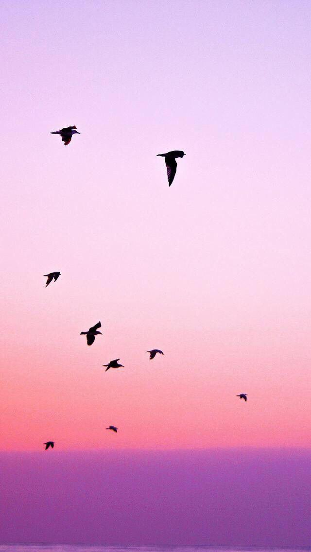 La libertà non si può spiegare. Si può soltanto respirare senza pensarci, come l'aria, e come l'aria rimpiangerla quando non c'è più. A differenza dei dogmi, non reclama certezze e non ne offre. I suoi mattoni sono i dubbi e gli errori, gli slanci e gli abusi. I suoi confini sono labili, mobili. E la sua rovina è l'assenza di confini, che le toglie il piacere sottile della trasgressione.