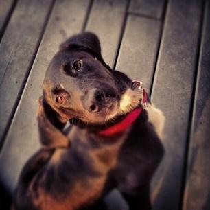 rescue dog Rescue dogs, Instagram posts, Make me smile