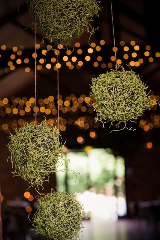 Moss ball hanging overheads by www.theeternalvase.com.au @ Chateau Dore Winery