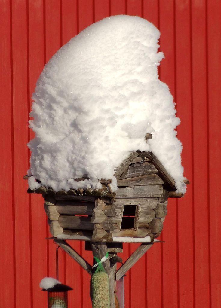 El lugar de alimentación de pájaros de la granja de Renos de Puolukkamaan Pirtit en Pello, Laponia