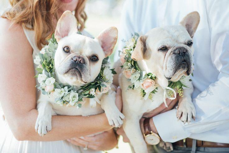 Puppy Love Dog Wedding Outfits French Bulldog Dog Wedding