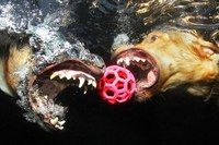 Фотограф Сет Кастил и его подводные собаки