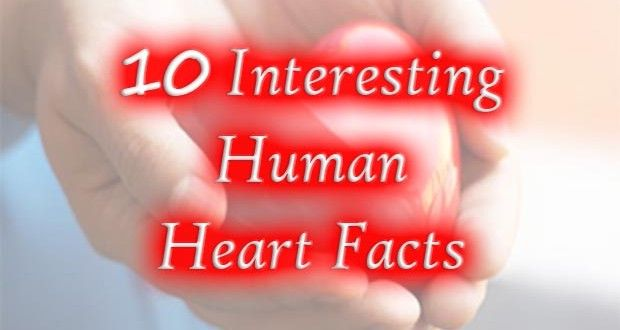 10 Interesting Facts About Human Heart