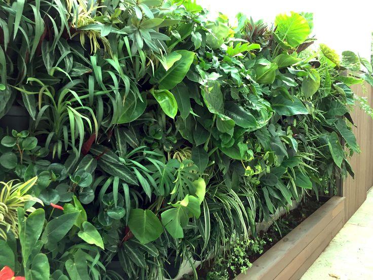 Atmosphy Green Wall www.atmosphy.com.au #greenwall #verticalgarden