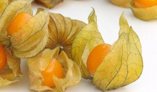 Altın Çilek meyvesinin faydaları nelerdir? Altın çilek meyvesinin zararları var mıdır? Altın çilek meyvesi nerede yetiştirilir ve nasıl tüketilir?