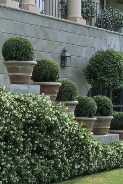Potted boxwoods on a beautiful stone staircase.