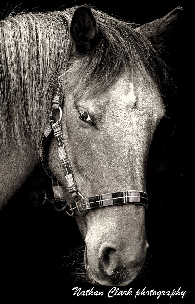 elaines horse by nathan clark on 500px