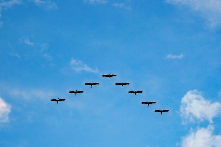 Madarak / Birds Forrás/source: pixabay.com