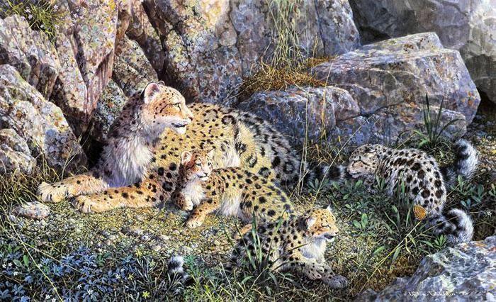 """""""Бесснежные барсы"""" (No snow leopards)"""