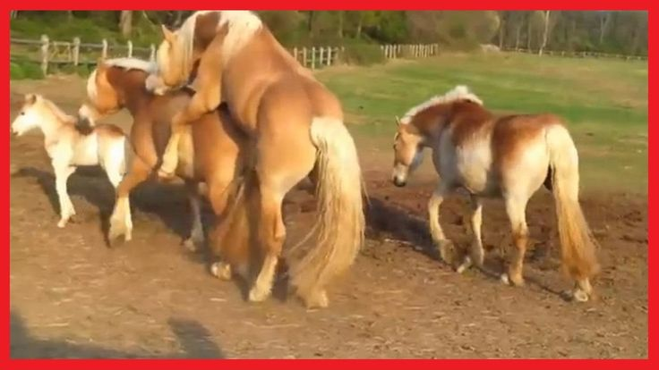 News Videos & more -  Horse Mating Hard Close Up Funny Videos | Big Horses Mating Season | Funny Wild Animals Mating #Music #Videos #News Check more at https://rockstarseo.ca/horse-mating-hard-close-up-funny-videos-big-horses-mating-season-funny-wild-animals-mating/