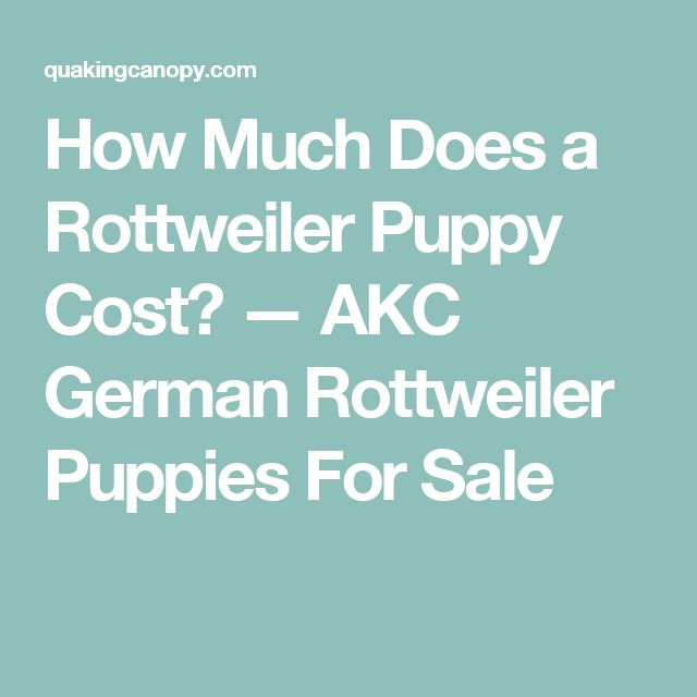 how to choose correct conformation in rottweiler puppies