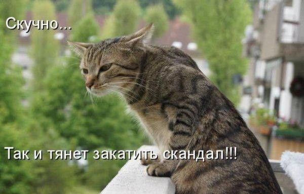 Картинки с котами скачать бесплатно