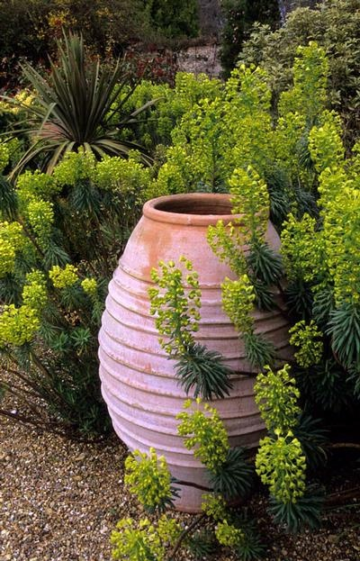 A good sized pithoi with Euphorbia wulfenii running riot around it.