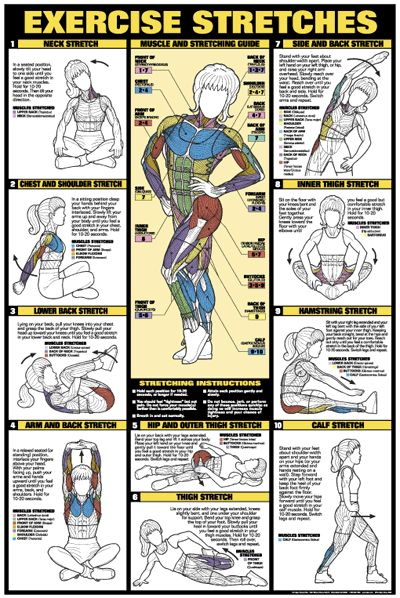EXERCISE STRETCHES (Women's Stretching) Wall Chart Poster - Available at www.sportsposterwarehouse.com