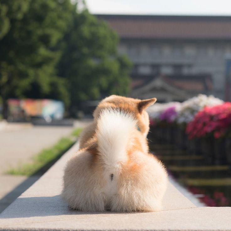 I felt relaxed lying in the sun.✨🐶✨おはまる〜*\(^o^)/* たまにこうやって日光浴しないと元気にならないの😊 #パパはデザフェスに出かけちゃった #あいつサボってなきゃいいけど🤔 #ハシビロコウとか #光合成中 #おしり見ないでね