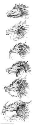 Anatomica Draconis by KatePfeilschiefter on DeviantArt