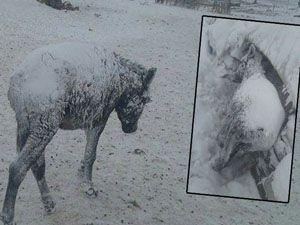 Şanlıurfa'da şoke eden görüntü! Eşekler buz tuttu