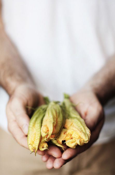 Ode to Italy by Caitlin Van Horn -- zucchini blossoms