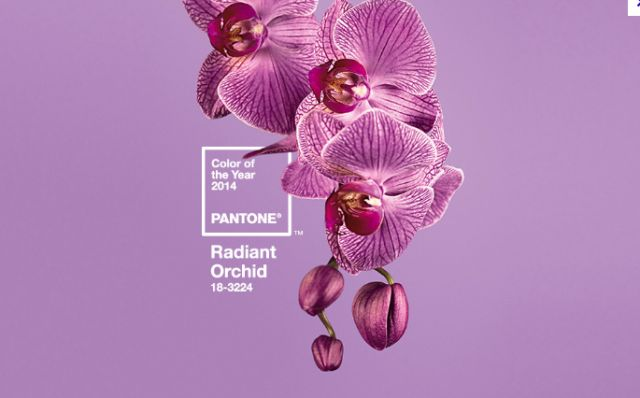 Pantone's color of the year, Radiant Orchid