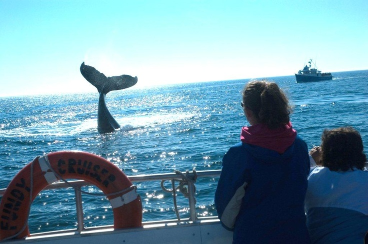 Bay of Fundy, Nova Scotia | Things to do on the Bay of Fundy | Bay of Fundy Fun Tours