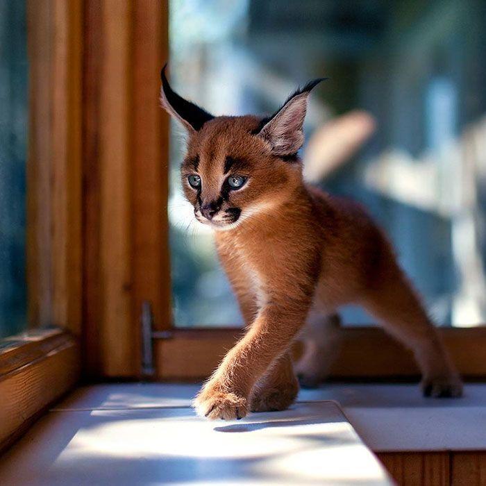 Wenn du ein Katzenliebhaber bist, hast du Glück, …