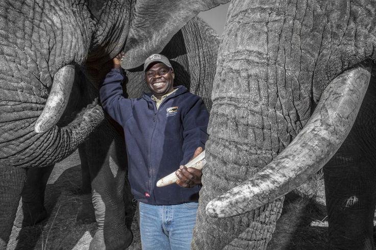 #JonssonWorkwear #Work #Workwear #Africa #Elephant #Clothing