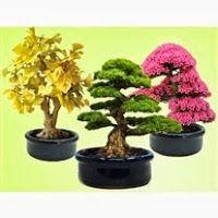 Bonsai bitkisi, bonsai styles