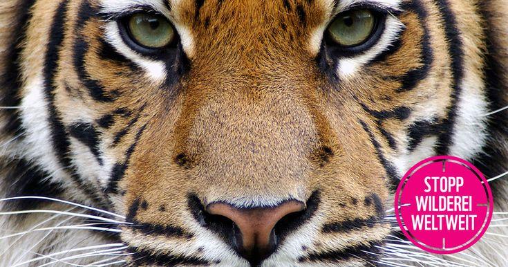 Stopp Wilderei weltweit