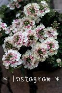 ジャンクガーデン ナチュラルガーデン Garden Frais 多肉の寄せ植え 花苗通販 ガーデニング雑貨 ジャンクガーデン 鉢 モスポット