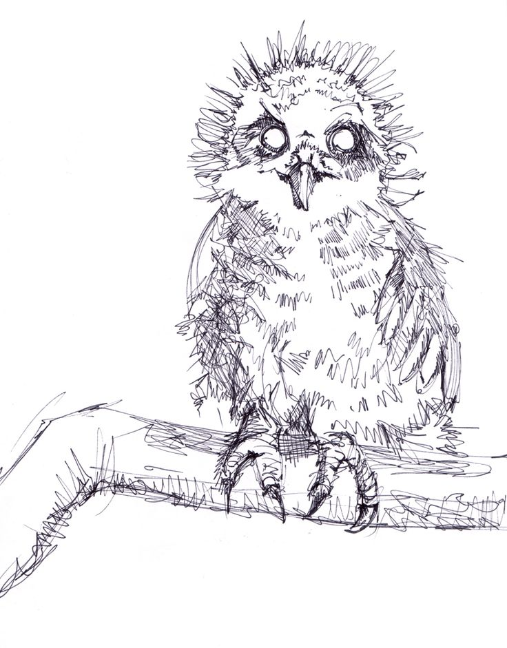 Owl in the Sketchbook – Crystal Smith - pen ink art  Check out the sketchbook for more! #sketch #sketchbook #drawing #draw #art