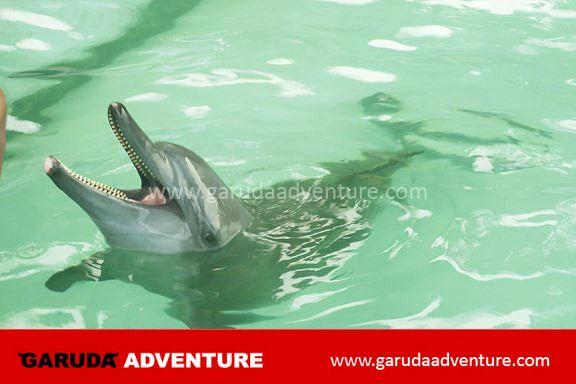 Kolam terapi lumba lumba di pulau bidadari