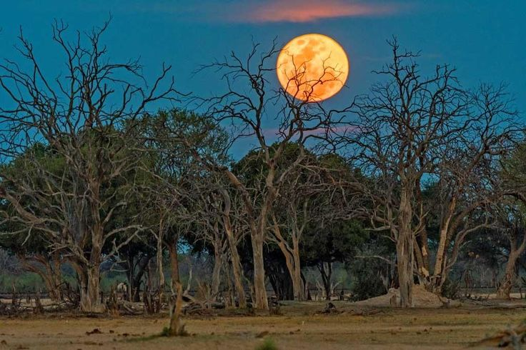Of all the sites you might have chosen to watch last night's Supermoon rise, might we suggest Hwange National Park's Ngamo Plains would have been right up there near the top?