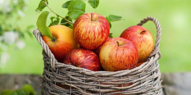 Äpfel sind ein gutes Heilmittel bei Durchfall. Denn der enthaltene Ballaststoff Pektin beruhigt die Darmwand und bindet Gifte