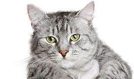 Vše pro kočky- beru všecko :-*