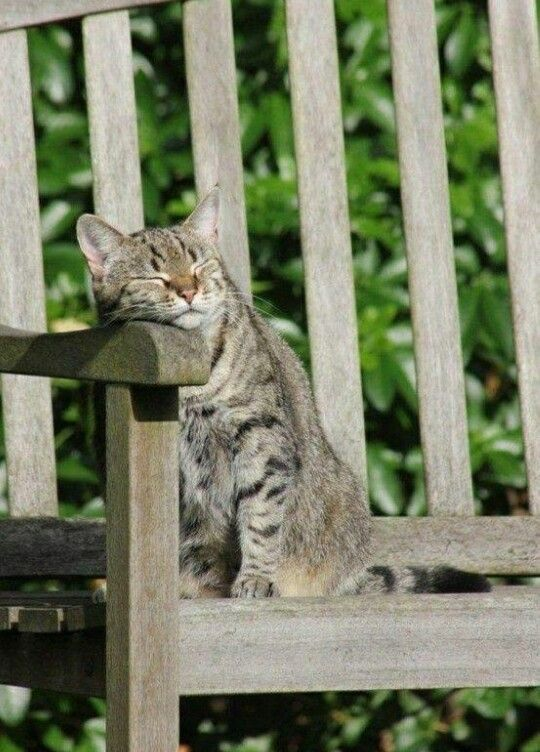Love cats in my garden.