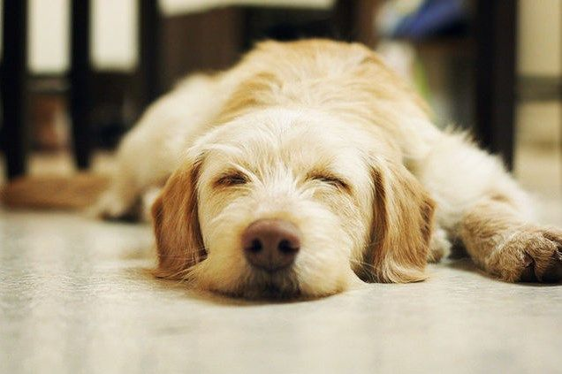 تفسير رؤية الكلاب في المنام للعزباء لابن سيرين والنابلسي موقع مصري Sleeping Dogs Cute Animal Videos Animals